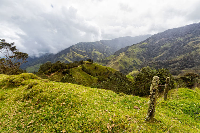 Aged fence posts in the mountains outside of Salento, Colombia. Cloud Colombia Farm Hiking Palm Pasture Quindío Rural Tree Trip Andean Cauca Colombian  Countryside Fence Forest Hike Jeep Landscape Old Quindío Salento Tolima Trek Wax