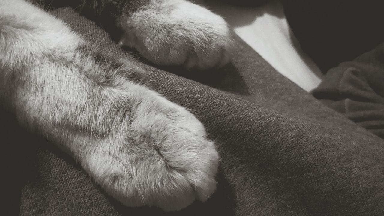 pets, dog, domestic animals, mammal, one animal, animal themes, indoors, animal leg, close-up, paw, human leg, human body part, low section, day, people
