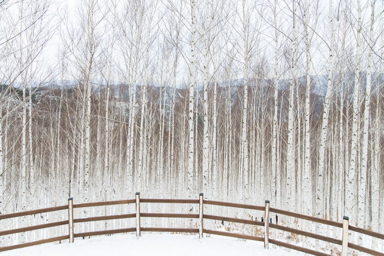 Snow Covered Railing Against Bare Trees During Winter