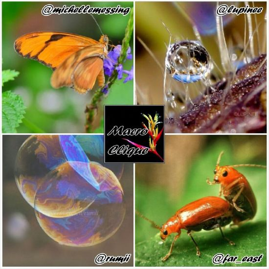 Thank you to @macroclique for kindly choosing my picture (top left). For your chance to be featured tag your macro photographs to the Macroclique album. Award Center