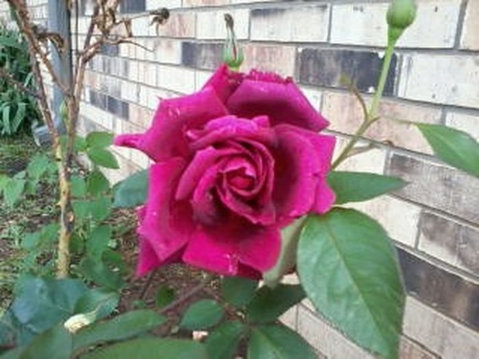 Red roses are my favorite. ! ! Enjoying Life First Eyeem Photo