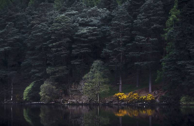 Beauty In Nature Glendalough Glendalough (The Valley Of Two Lakes) Ireland Nature No People Scenics Tranquil Scene Tranquility Water Wicklow
