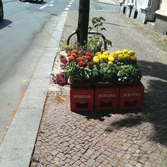 Summerinthecity Greetings From  Leipzig Streetart Flowerporn Sternburger Beerporn Odeandieheimat Ichliebeleipzig