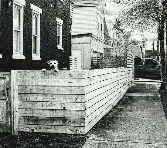 Dog Passing By Cincinnati Ohio Street Photography Blackandwhite Photography Observing Encounter Walking Around USA