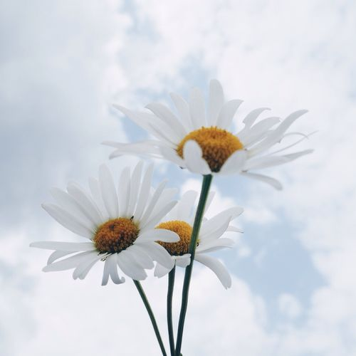 Close-up of flower blooming against sky