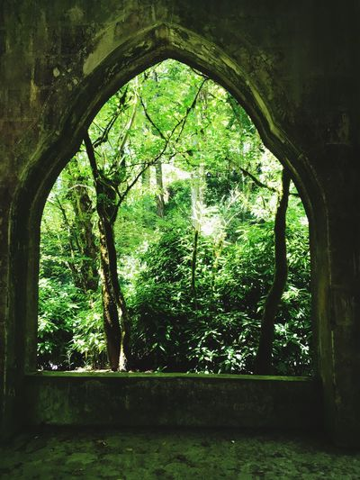 Window to paradise Forest Window Paradise Nature Tree Portugal Sintra Royal Gardens  Magic Window