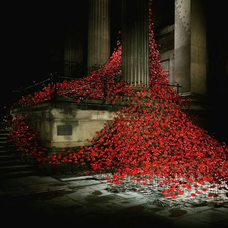 Weeping Window Liverpool Poppies  Poppies Tour St George's Hall Night Lights Nightphotography
