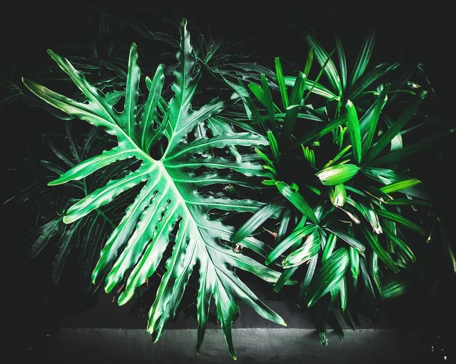 Leaves Plants
