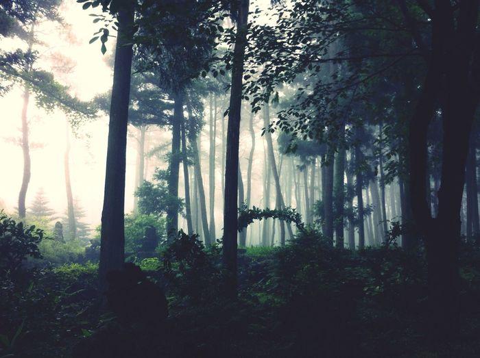 JEJU ISLAND  Forest Green