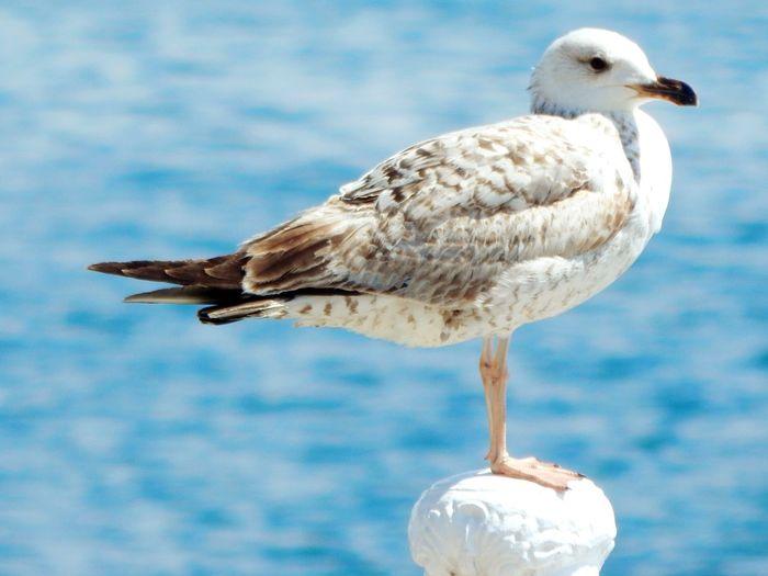 Taking Photos Hello World Relaxing Enjoying Life Seaside Walking On The Beach Bird Photography Seagulls And Sea Seagull Simple Photography Closeupshot