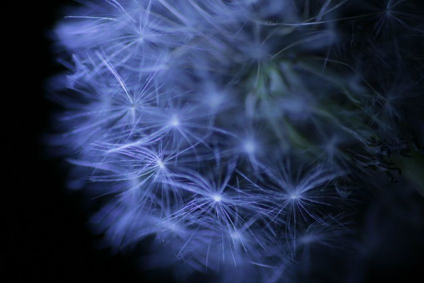 Nature Flower Hokkaido Beauty In Nature EOS Kiss Digital X