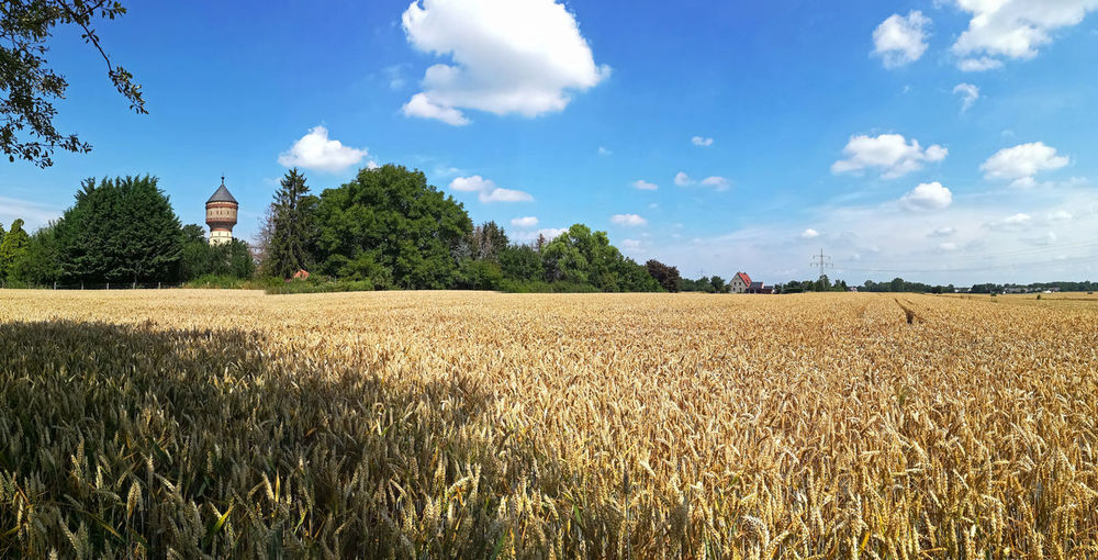 Lippstadt Panorama View Panorama Foto Panorama Landscape Wasserturm Plant Field Land Landscape Agriculture Sky Rural Scene Tree Growth Farm Crop  Beauty In Nature Nature Scenics - Nature Environment Day Cloud - Sky Tranquility Tranquil Scene Cereal Plant No People Plantation