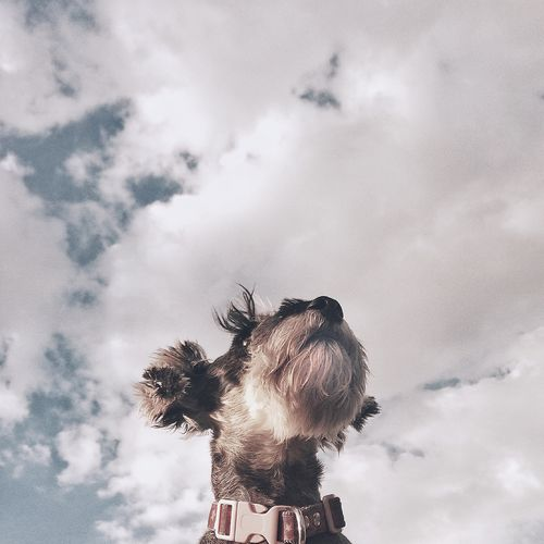Low angle view of dog against cloudy sky
