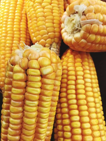 Corn On The Cob Corn Sweetcorn Food And Drink Vegetable Food Healthy Eating Freshness Yellow Cereal Plant Raw Food Close-up No People Vegetarian Food
