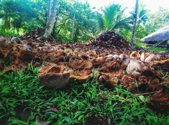 Coconuthusk