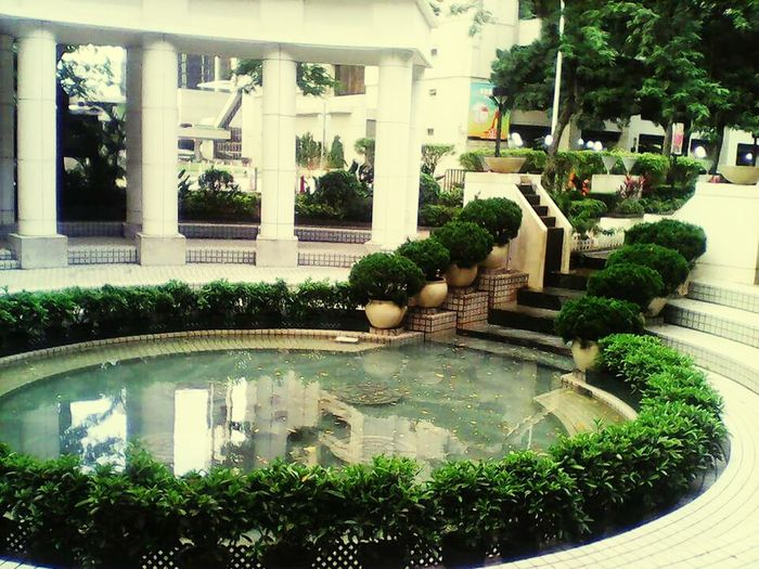 Hongkong Garden Plant Tree Swimming Pool Ornamental Garden Water Formal Garden Fountain Architecture Green Color Growth Building Exterior Built Structure No People Nature Day Outdoors Botanical Garden