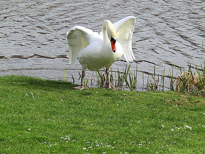 Animal Wildlife Bird Grass I`m Coming 2017 Ich Komm Ja Schon-----heute In Ristick Nature Outdoors White Color