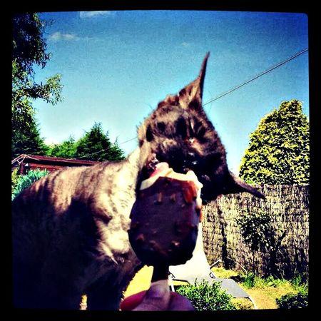 Enjoying the garden with mum and a ice cream!! Wohnglück