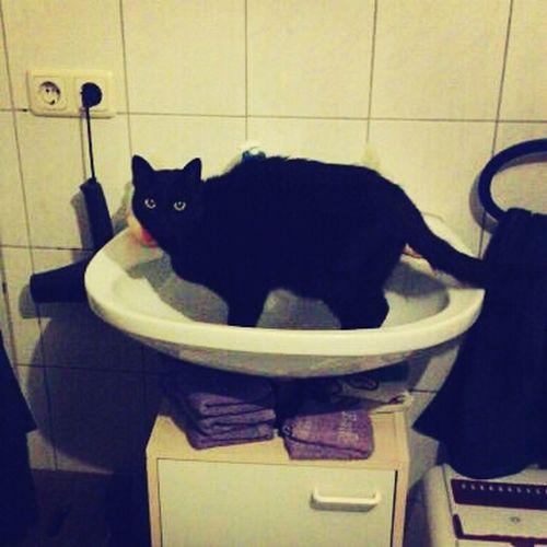 Sie Stellt Sich Eiskalt Ins Becken ;)# Katze