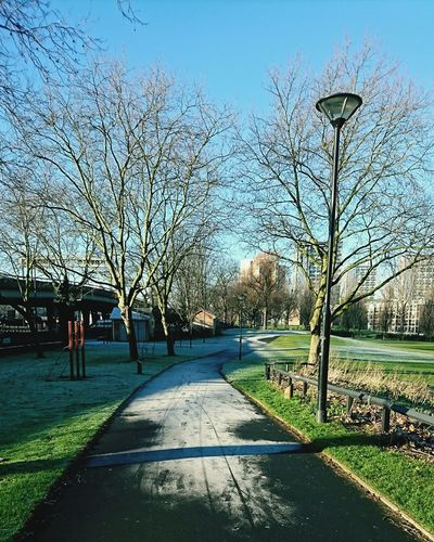 Pathway Path In Nature Two Trees Frosty Morning Shadow And Light Nature Photography No People Gradient Gradient Nature Centre Shot Long Shot Peaceful Morning Peaceful Nature City Park London Park Nature In London Nature In The City Perspective Peaceful Perspectives