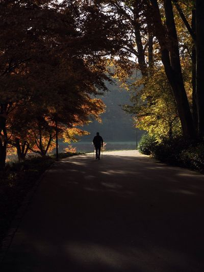 Walker Tree Road Full Length One Person Transportation Autumn The Way Forward Silhouette Outdoors Nature Beauty In Nature People