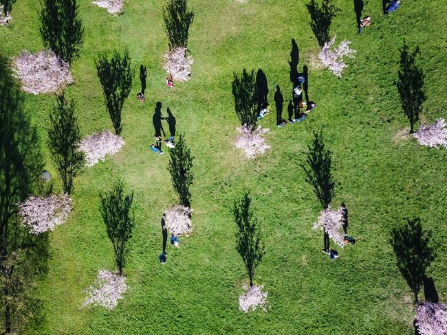 Shadows of sakuras Green Color Day Nature Plant High Angle View Growth No People Sunlight Outdoors Lifestyles Grass