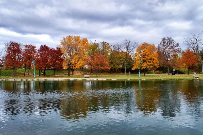 Tree Water Autumn Plant Reflection Beauty In Nature Lake Change Nature Sky Scenics - Nature Tranquil Scene Tranquility No People Day Cloud - Sky Orange Color Non-urban Scene Waterfront Outdoors