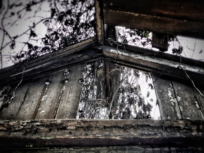 Behind The Wall Window Low Angle View No People Day Architecture Built Structure Roof Indoors  Building Exterior Close-up Tree