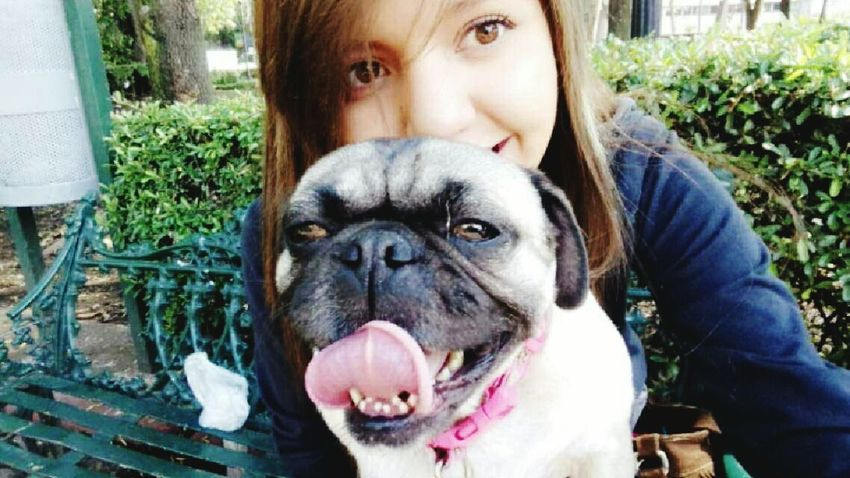 Pug Ground Eyesbrown Walk Lovepugs My Life Mypuppydog