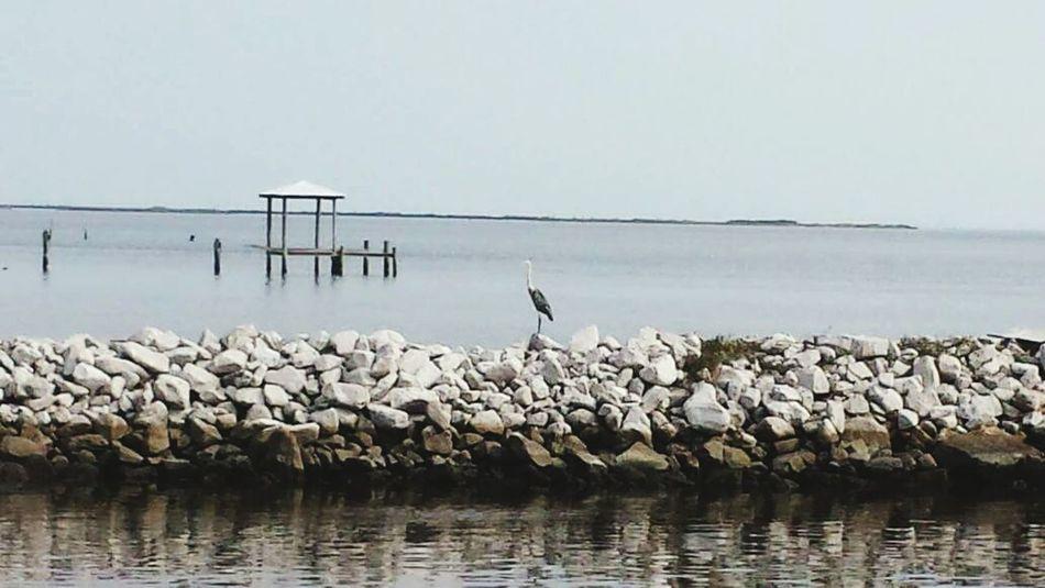 Water Wildlife Bird Sea Tranquility Waterfront Perching Nature Calm Non-urban Scene