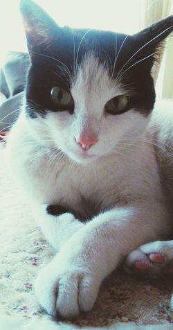 Mycat♥ Lovemycat♥ Babycat ❤