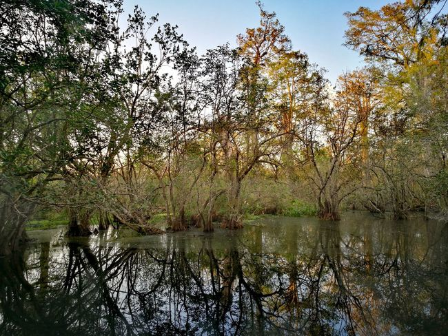 Swamp Reflection Tree Water Nature Lake Beauty In Nature Outdoors Sky No People Day Scenics