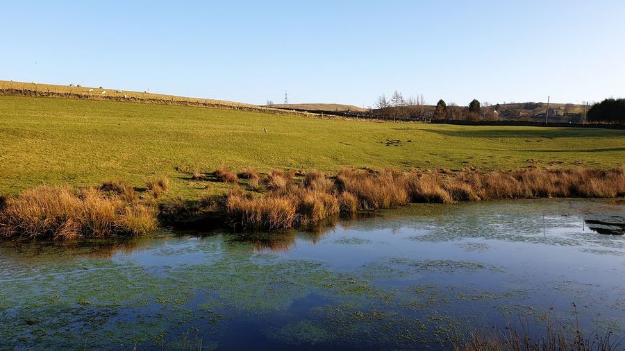 Natural pond.