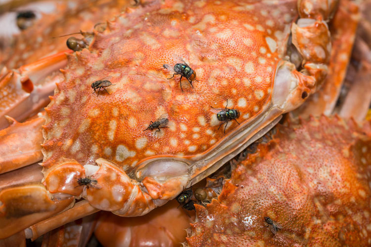 High angle view of crab for sale in market
