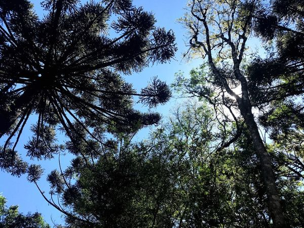 Tree Plant Low Angle View Sky Growth Nature No People