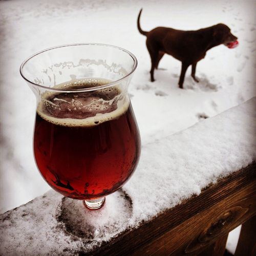 Drinking and Abbey and tossing Ivy the ball in the snow Beer Dogs Pets Hanging Out Enjoying Life