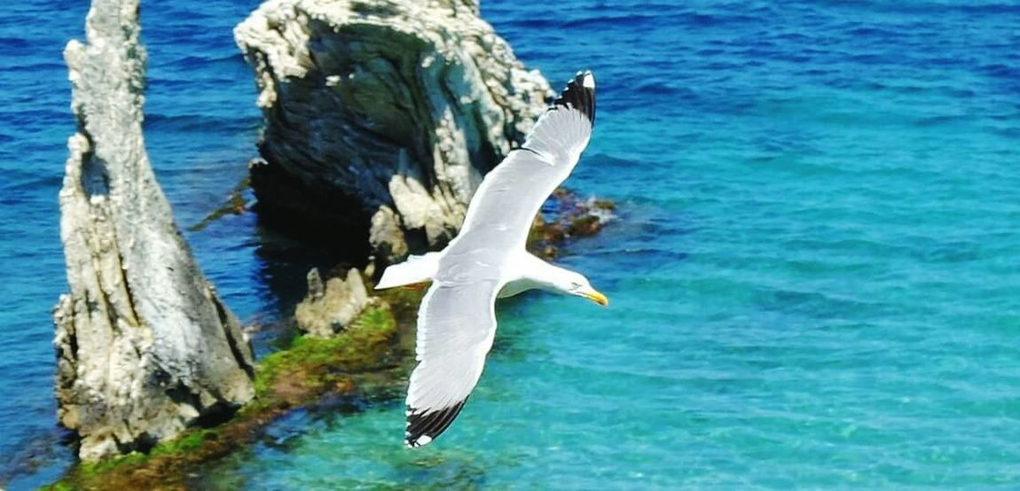 Gabbiano Sea And Sky Seaside Seascape Animals Animal Flying Flying Bird Fly