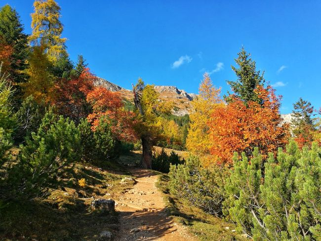Herbst Autumn🍁🍁🍁 Colors Outdoors Nature Eyemphotography EyeEmNewHere Likeit Loveit Mountain Weg Traumhaft Tree Sky Plant Landscape