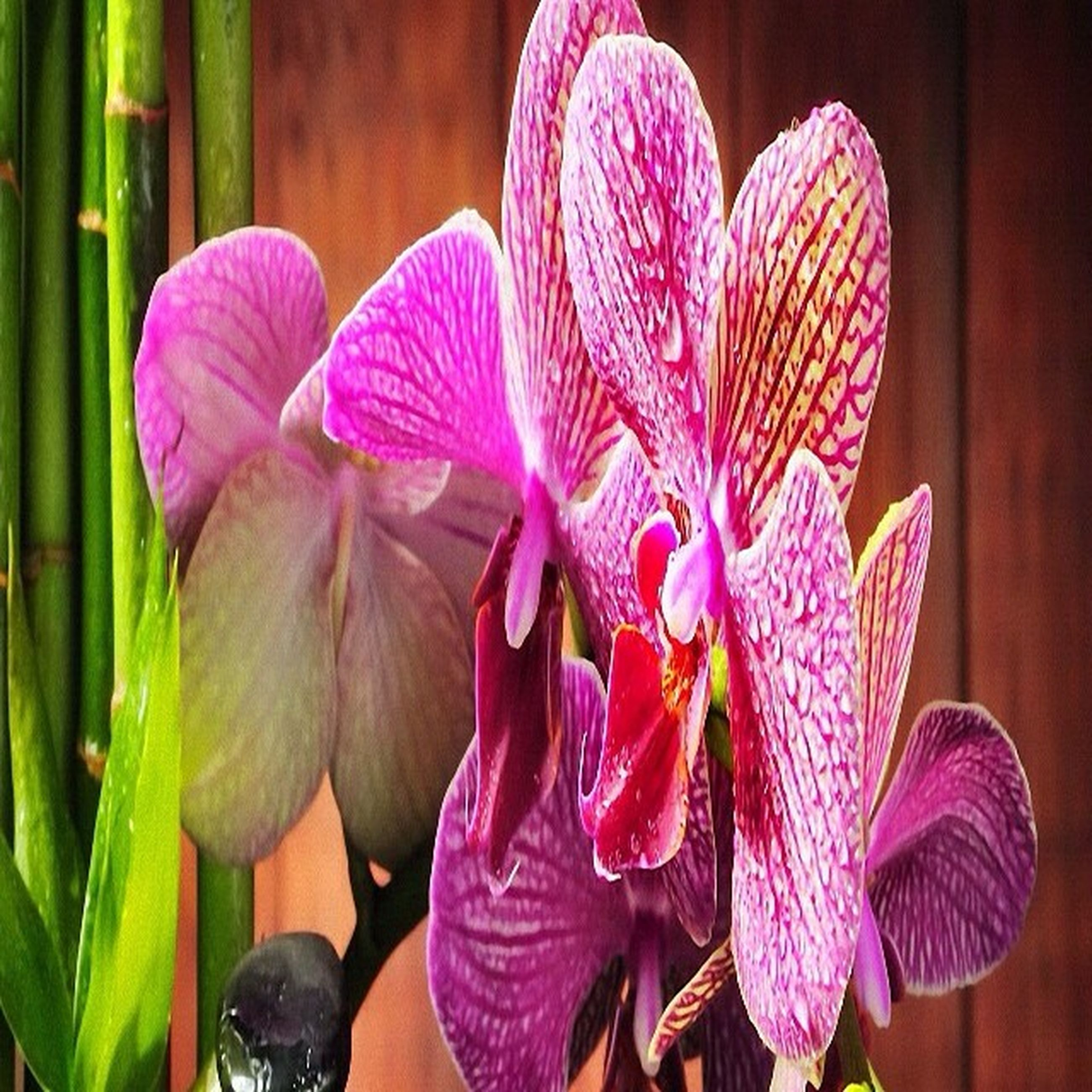 flower, petal, flower head, fragility, freshness, beauty in nature, close-up, pink color, orchid, growth, purple, blooming, nature, plant, focus on foreground, stamen, no people, pollen, single flower, in bloom
