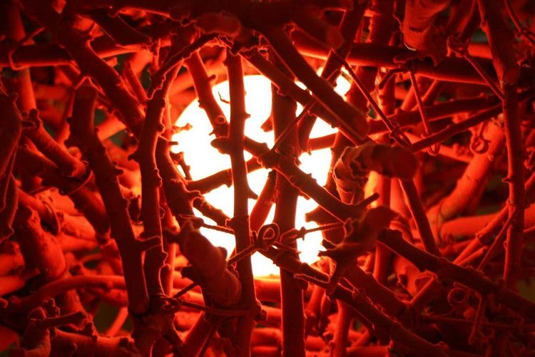 Close-up of illuminated light amidst sticks