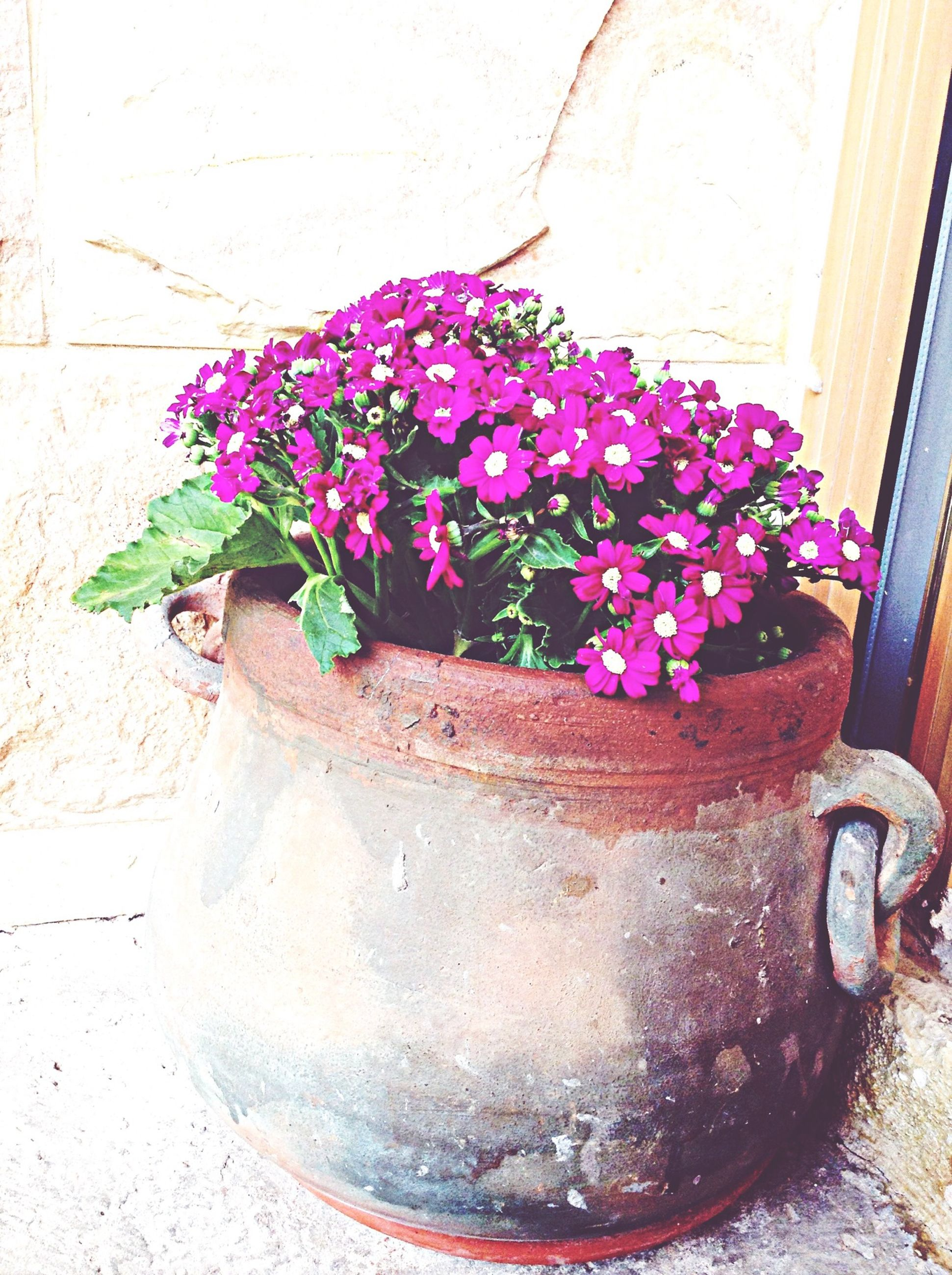 flower, plant, potted plant, wall - building feature, fragility, growth, freshness, petal, purple, built structure, wall, flower pot, leaf, pink color, architecture, no people, blooming, stone wall, day, vase