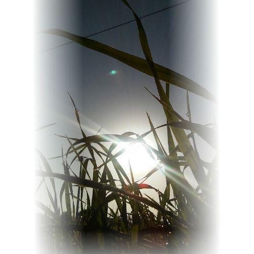 Good Morning Sunshine Buongiorno Naturephotography Naturlovers Good Day Sun Sole