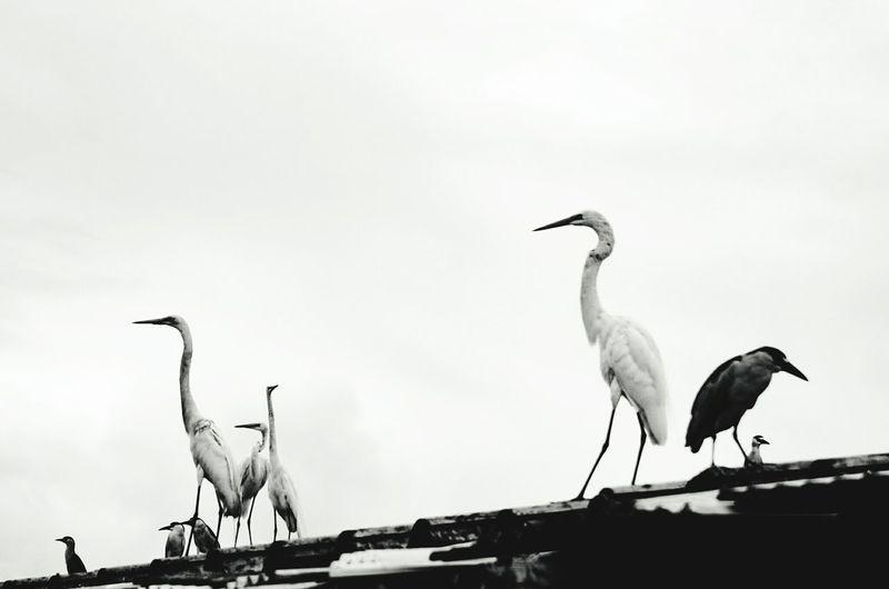 Bird Animals In The Wild Animal Wildlife Stork Animal Themes White Stork One Animal Outdoors Day Ibis No People Perching Nature