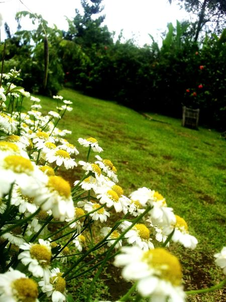 Kebun mawar Wonderful Day Wonderful Indonesia Hanging Out garut
