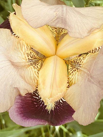 Close-up of fresh white flower