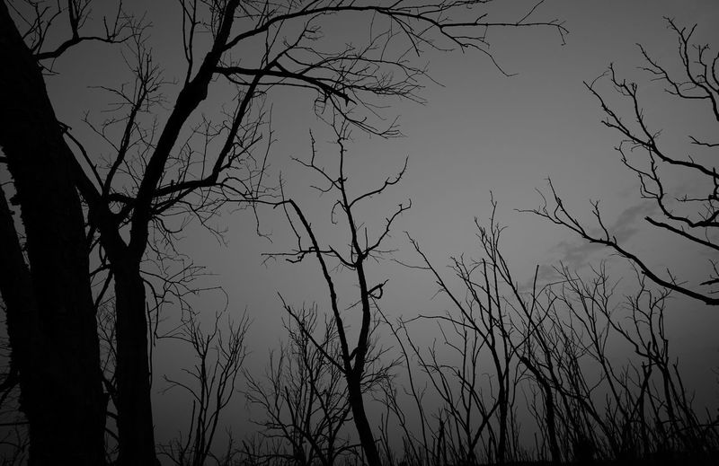 Low angle view of silhouette bare trees against sky at dusk