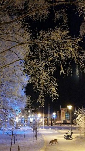 прогулка парк иней деревья ноябрь сибирь Природа Nature Tree Snow