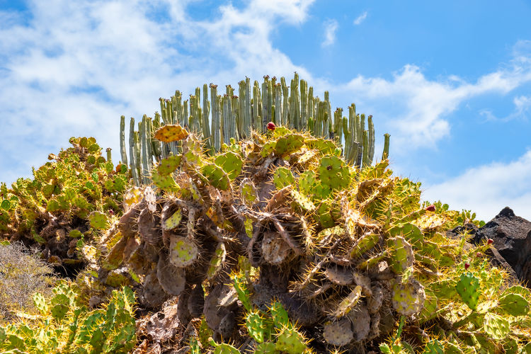 Low angle view of cactus plant against sky