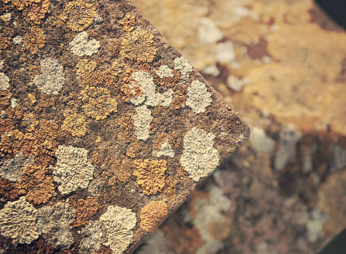 Texture Backgrounds Bokeh Close-up Lichen Lichens No People Outdoors Rock - Object Textured