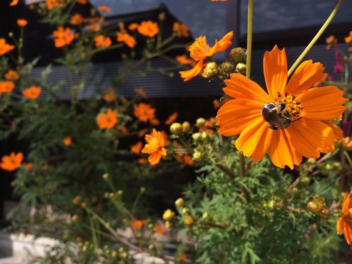 Flowers Incects HoneyBee